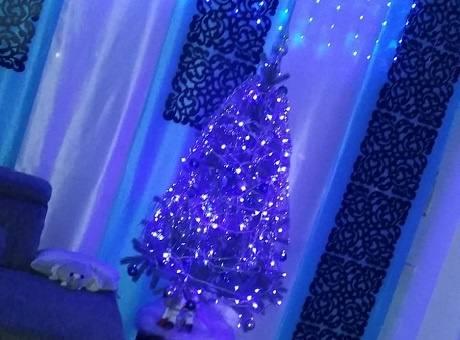 Warum-schm-cken-wir-den-Weihnachtsbaum
