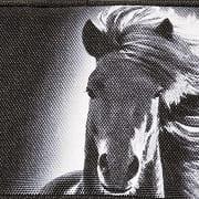 Walker Dream Horse