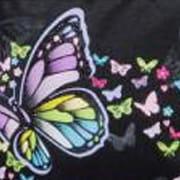 Schneiders Papillon